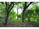 Residential lots bordered by protected natural area, a short walk from Tamarindo beach., Playa Tamarindo, Guanacaste